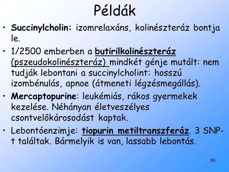 Példák Succinylcholin: izomrelaxáns, kolinészteráz bontja le.