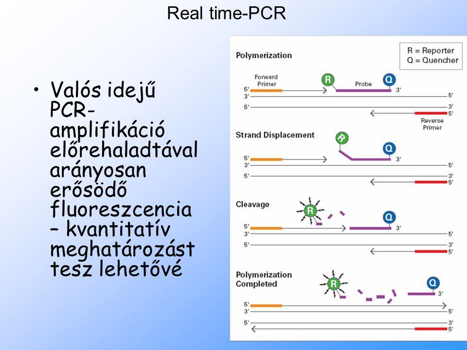 Real time-PCR Valós idejű PCR- amplifikáció előrehaladtával arányosan erősödő fluoreszcencia – kvantitatív meghatározást tesz lehetővé.