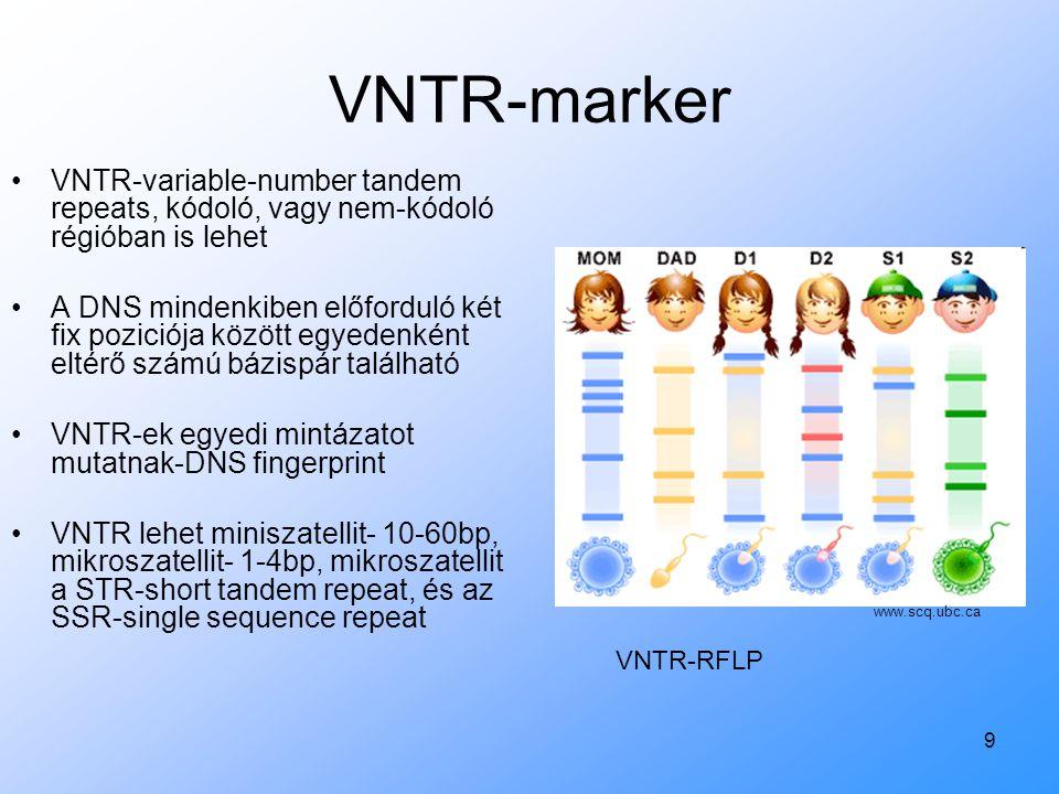 VNTR-marker VNTR-variable-number tandem repeats, kódoló, vagy nem-kódoló régióban is lehet.
