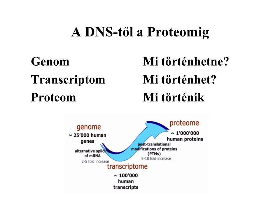 A DNS-től a Proteomig Genom Mi történhetne Transcriptom Mi történhet