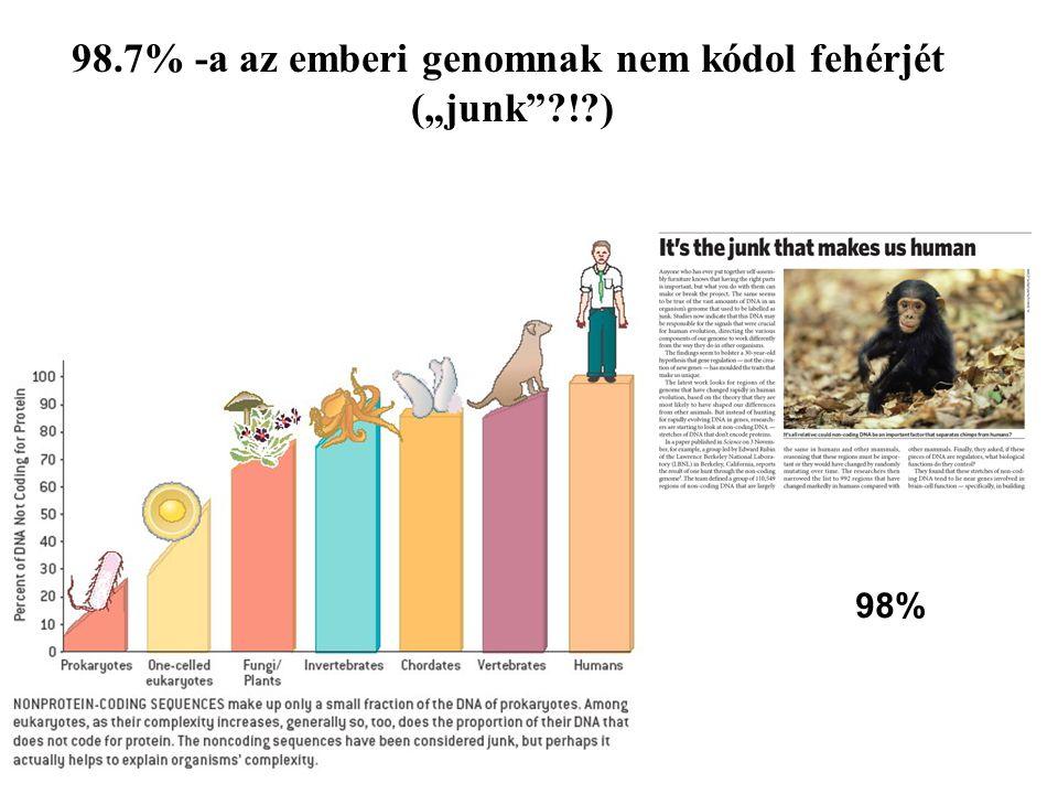 98.7% -a az emberi genomnak nem kódol fehérjét