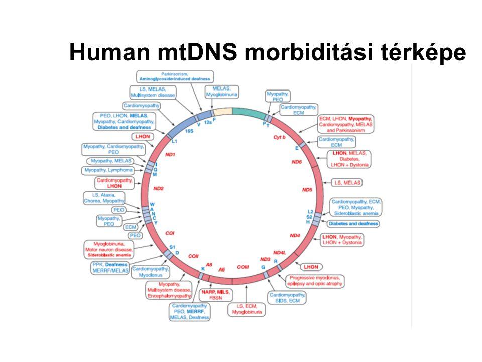 Human mtDNS morbiditási térképe