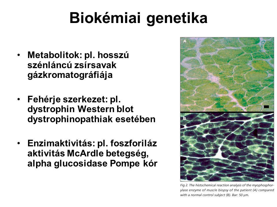 Biokémiai genetika Metabolitok: pl. hosszú szénláncú zsírsavak gázkromatográfiája.