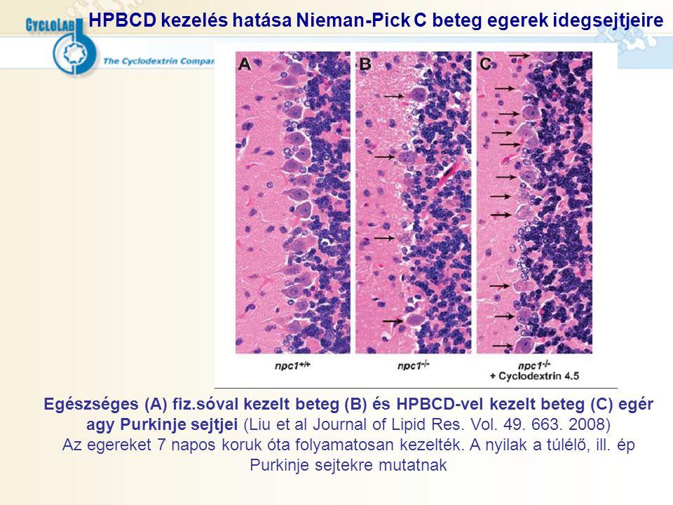 HPBCD kezelés hatása Nieman-Pick C beteg egerek idegsejtjeire