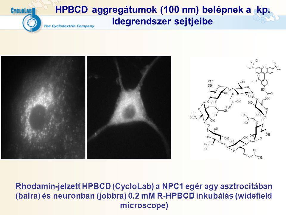 HPBCD aggregátumok (100 nm) belépnek a kp. Idegrendszer sejtjeibe