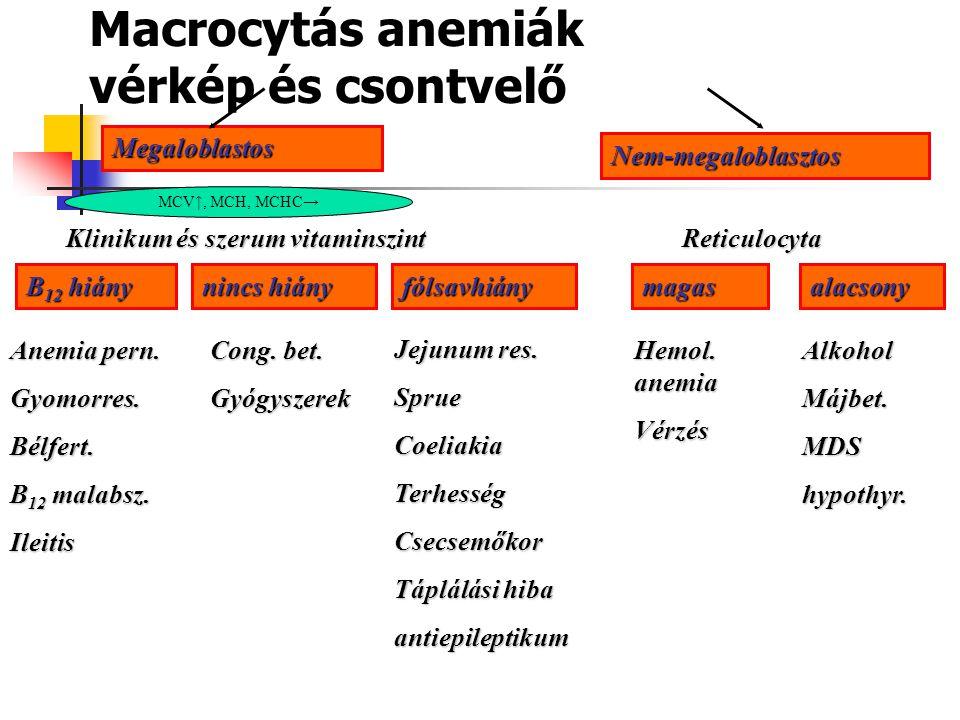 Macrocytás anemiák vérkép és csontvelő