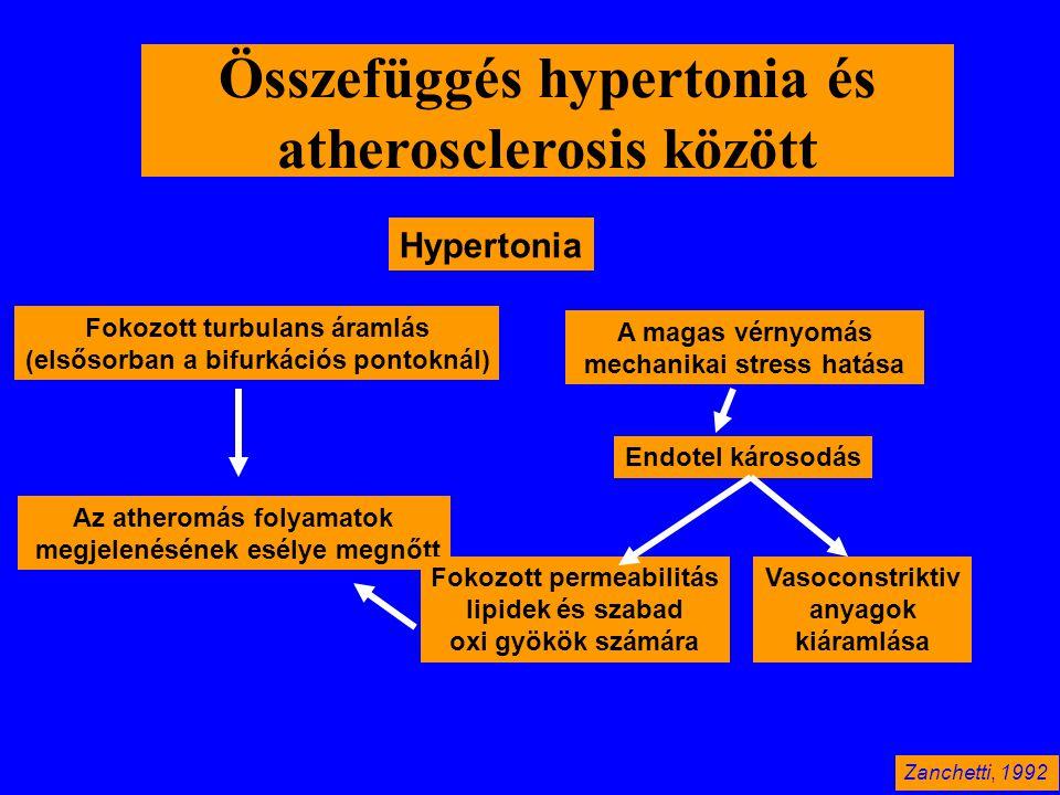 Összefüggés hypertonia és atherosclerosis között