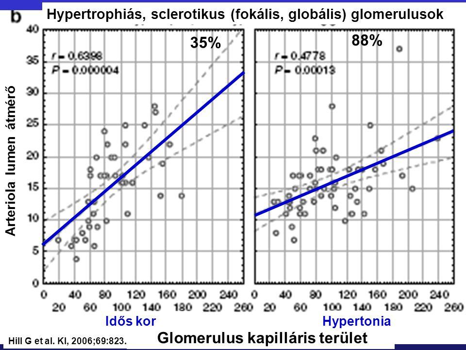 Glomerulus kapilláris terület