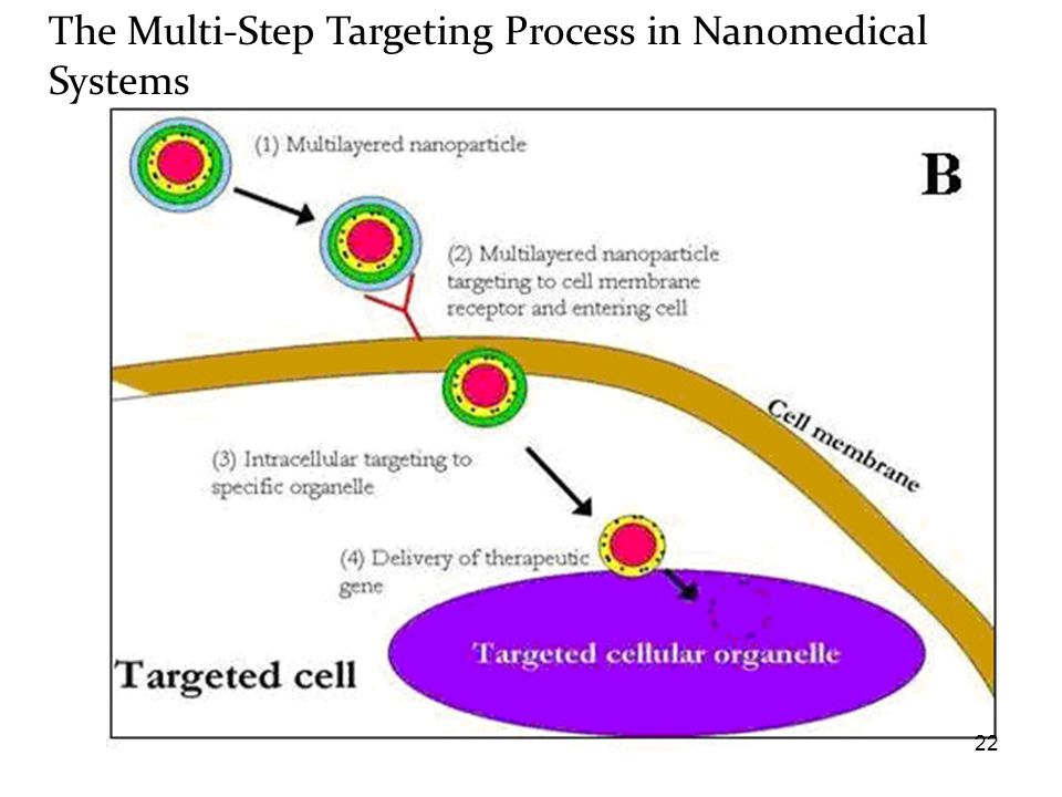 The Multi-Step Targeting Process in Nanomedical Systems