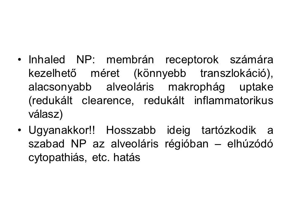 Inhaled NP: membrán receptorok számára kezelhető méret (könnyebb transzlokáció), alacsonyabb alveoláris makrophág uptake (redukált clearence, redukált inflammatorikus válasz)