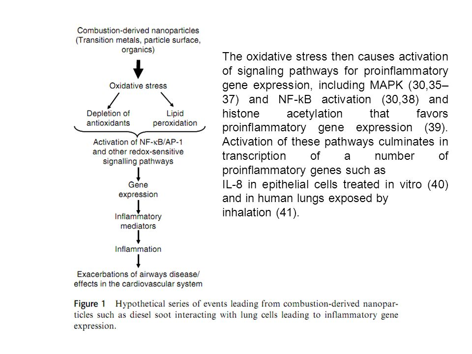 The oxidative stress then causes activation of signaling pathways for proinflammatory gene expression, including MAPK (30,35–37) and NF-kB activation (30,38) and histone acetylation that favors proinflammatory gene expression (39). Activation of these pathways culminates in transcription of a number of proinflammatory genes such as