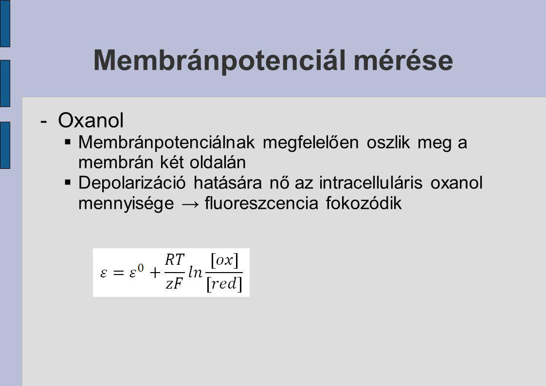 Membránpotenciál mérése