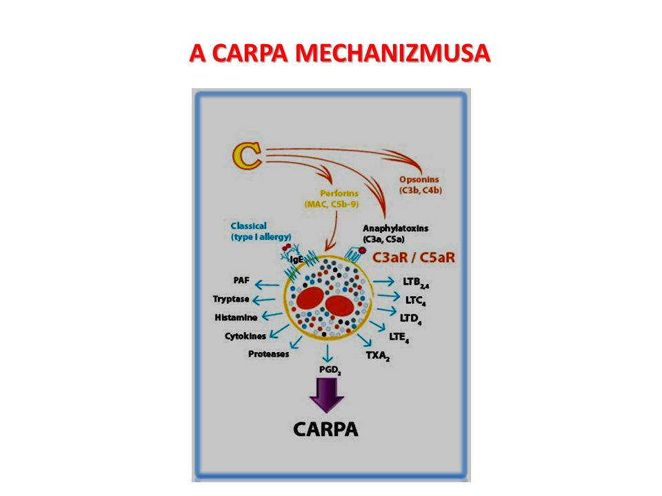 A CARPA MECHANIZMUSA