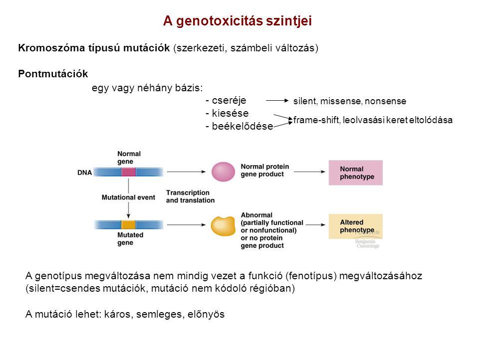 A genotoxicitás szintjei