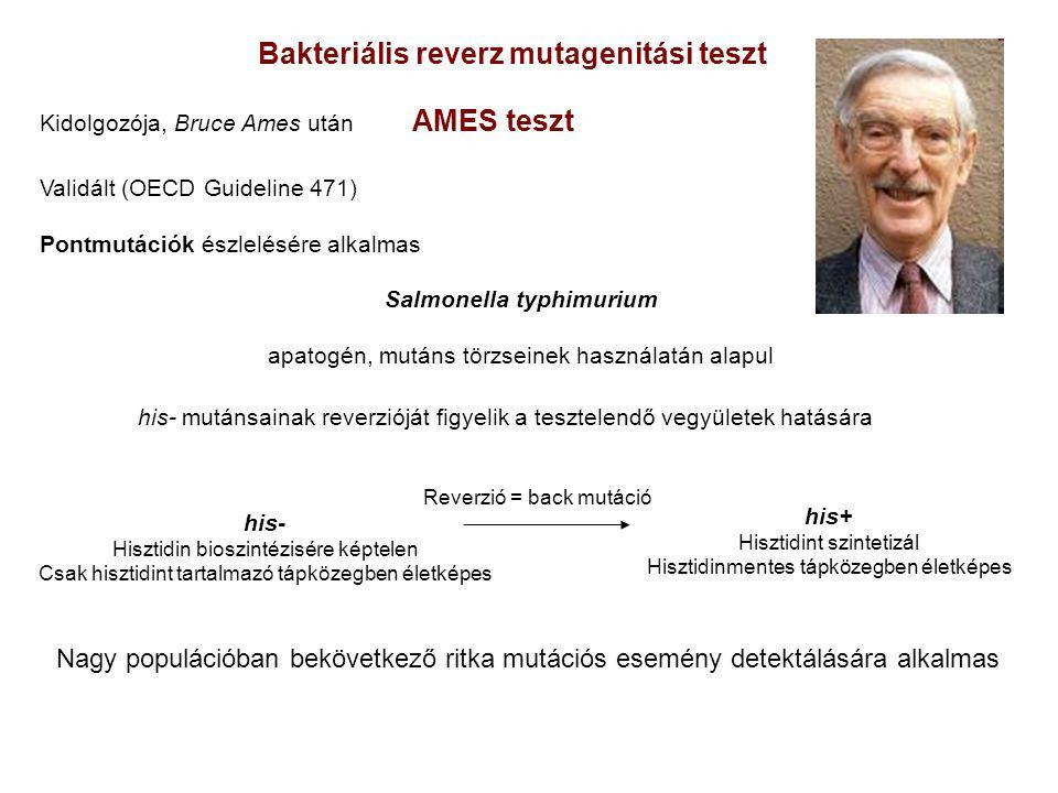 Bakteriális reverz mutagenitási teszt Salmonella typhimurium