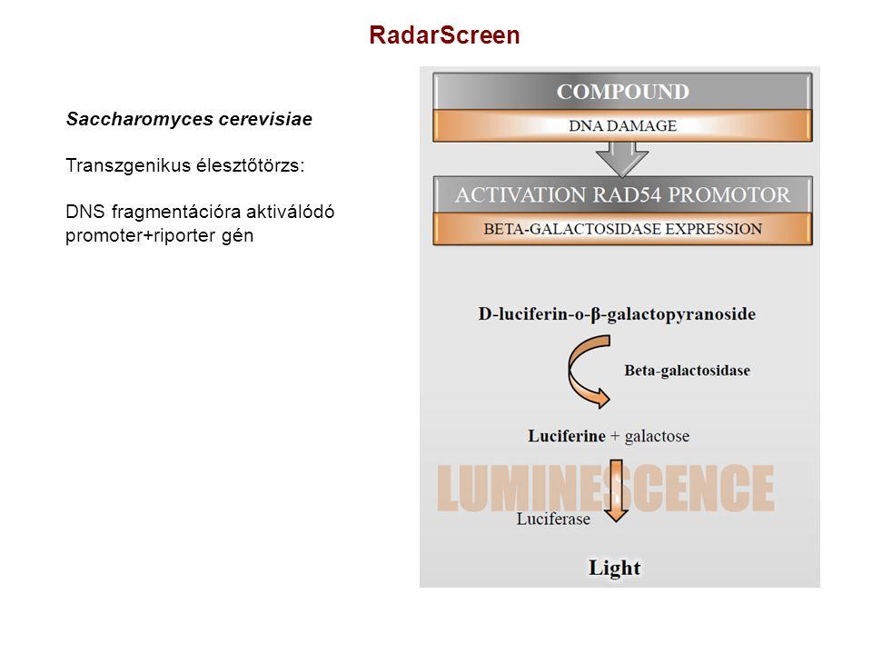 RadarScreen Saccharomyces cerevisiae Transzgenikus élesztőtörzs: