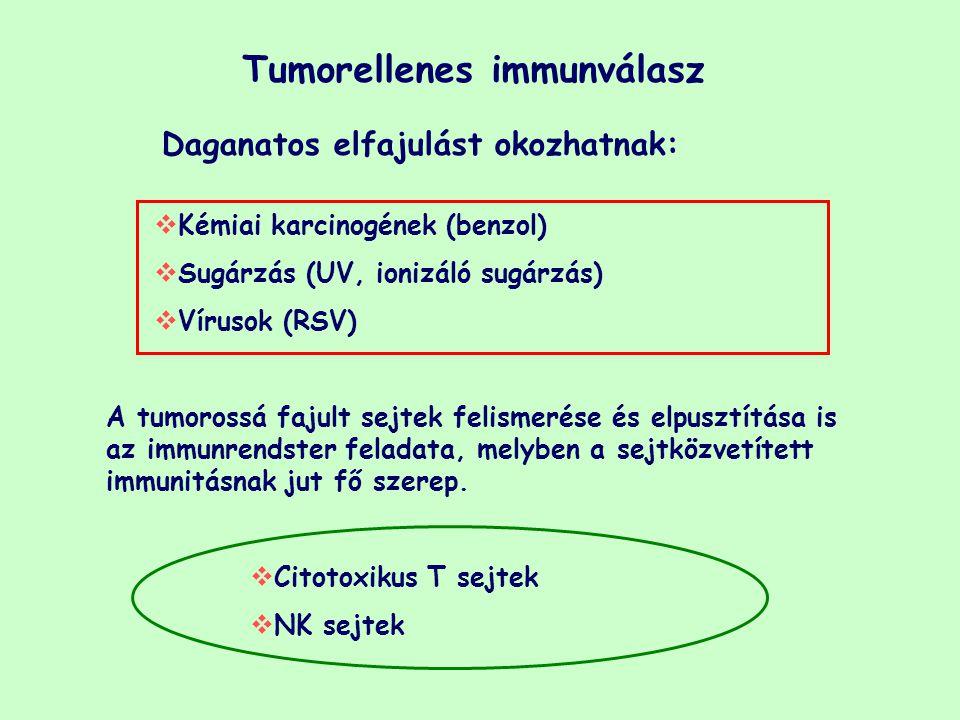 Tumorellenes immunválasz