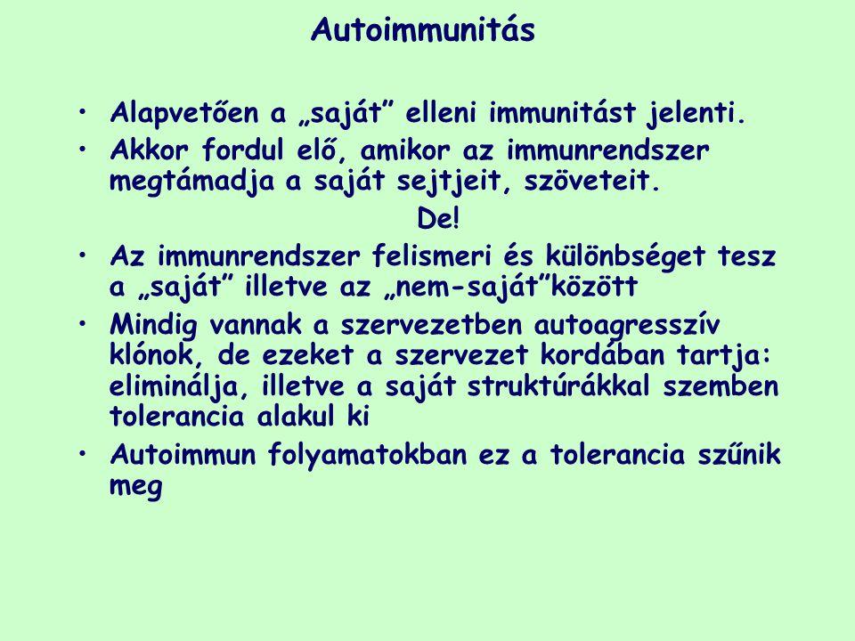 """Autoimmunitás Alapvetően a """"saját elleni immunitást jelenti."""