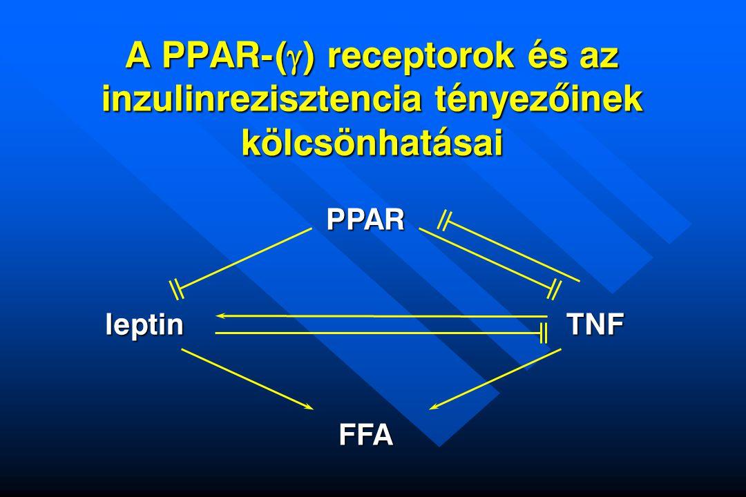 A PPAR-(g) receptorok és az inzulinrezisztencia tényezõinek kölcsönhatásai