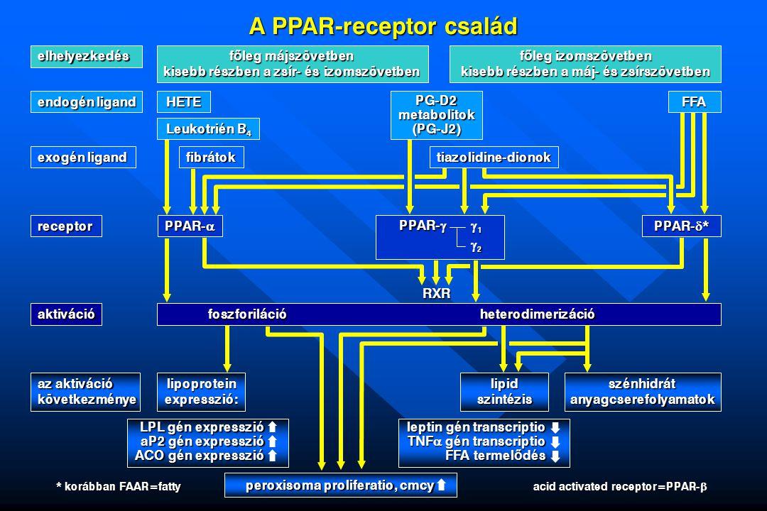 A PPAR-receptor család