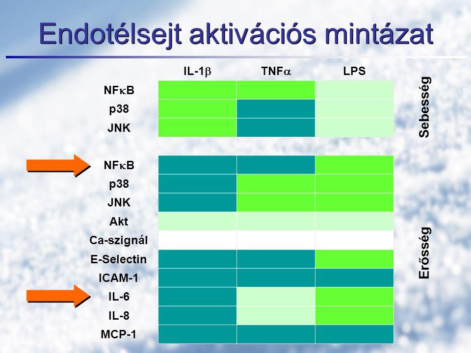 Endotélsejt aktivációs mintázat