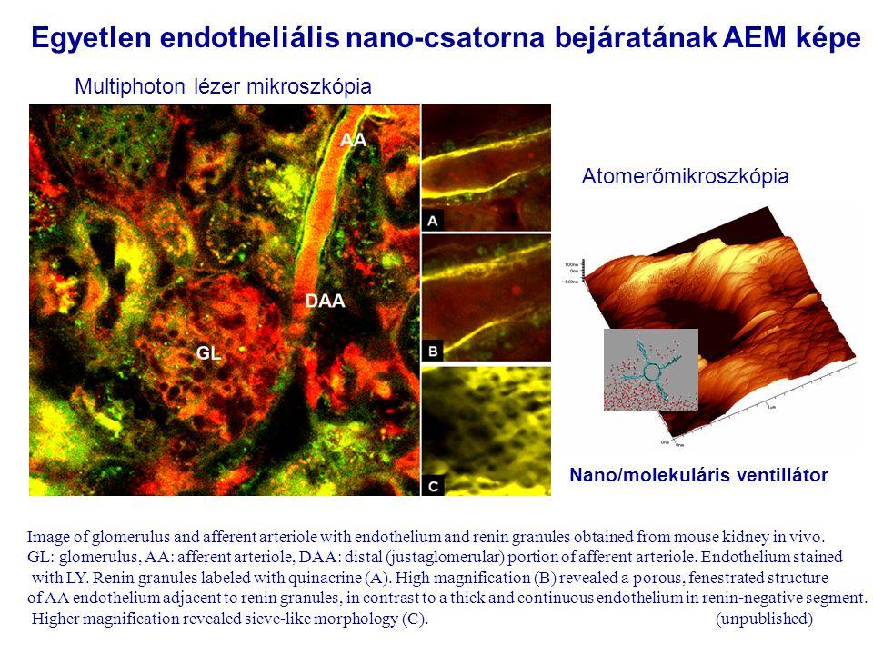 Egyetlen endotheliális nano-csatorna bejáratának AEM képe