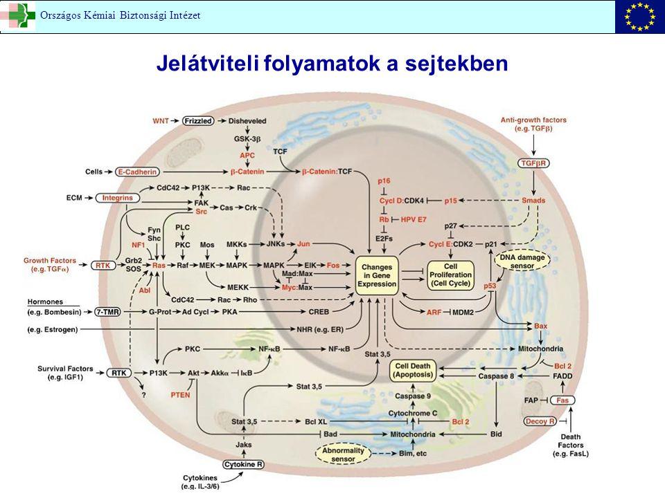 Jelátviteli folyamatok a sejtekben