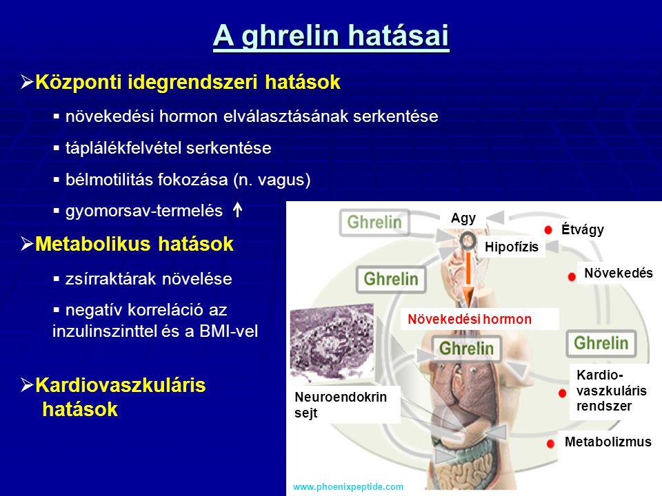 A ghrelin hatásai Központi idegrendszeri hatások Metabolikus hatások