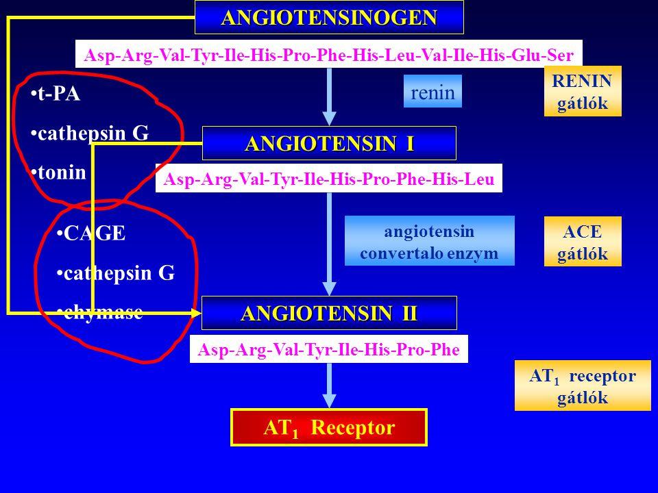 ANGIOTENSINOGEN ANGIOTENSIN I ANGIOTENSIN II AT1 Receptor