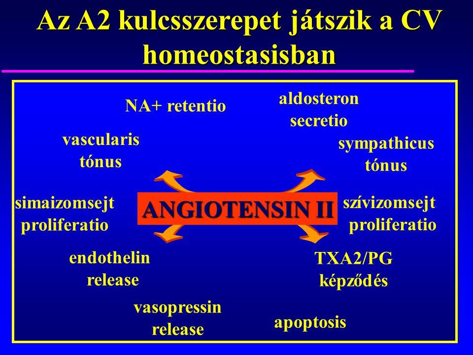 Az A2 kulcsszerepet játszik a CV homeostasisban