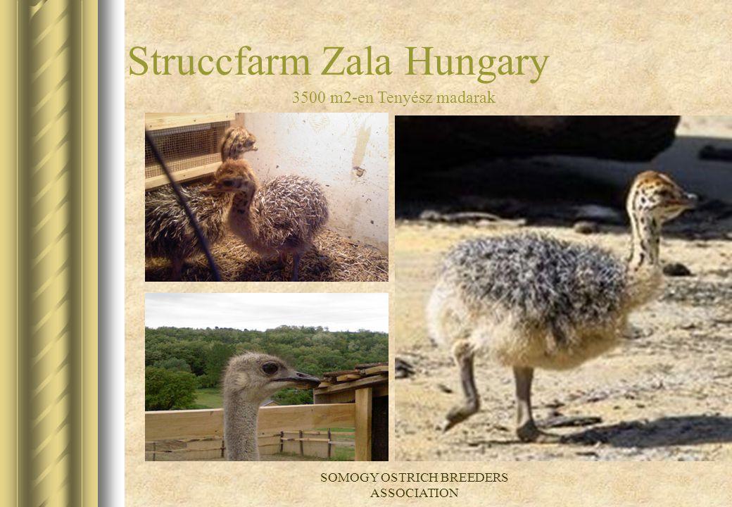 Struccfarm Zala Hungary