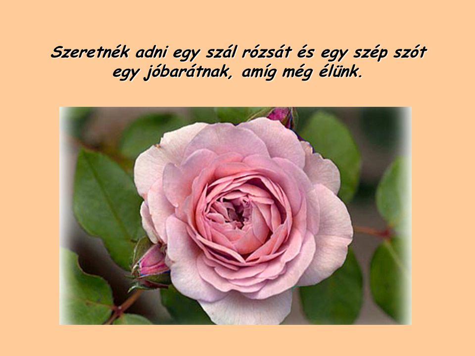Szeretnék adni egy szál rózsát és egy szép szót egy jóbarátnak, amíg még élünk.
