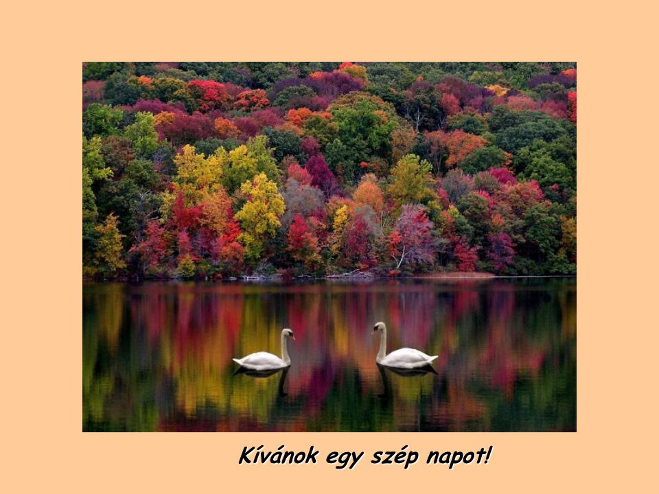 Kívánok egy szép napot!
