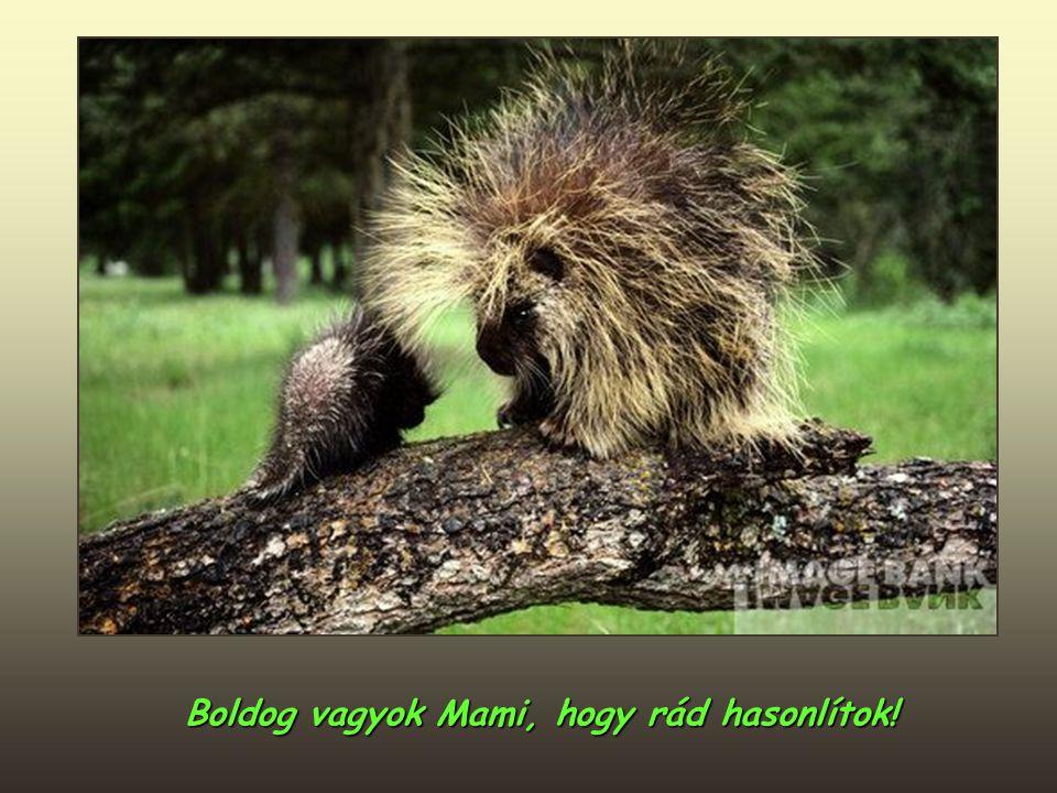 Boldog vagyok Mami, hogy rád hasonlítok!