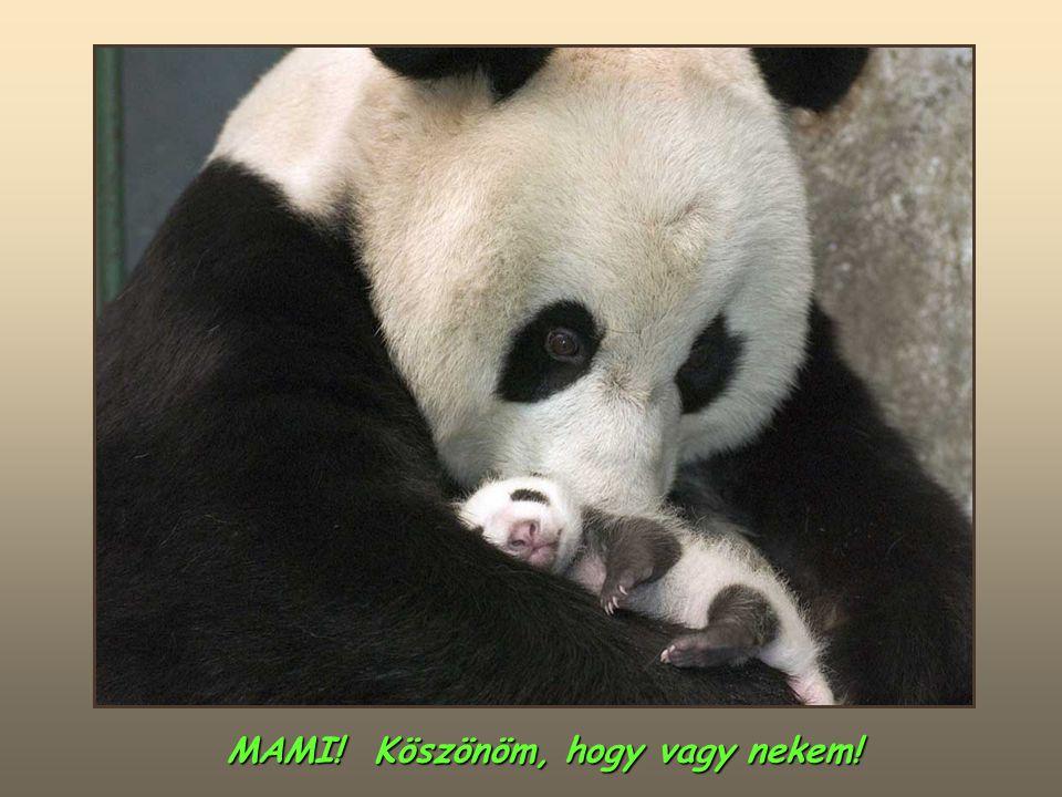 MAMI! Köszönöm, hogy vagy nekem!