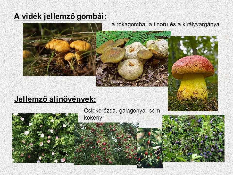 A vidék jellemző gombái: