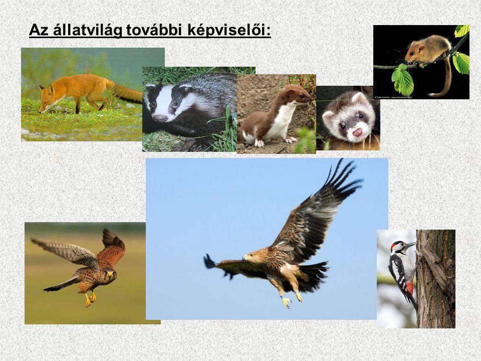 Az állatvilág további képviselői: