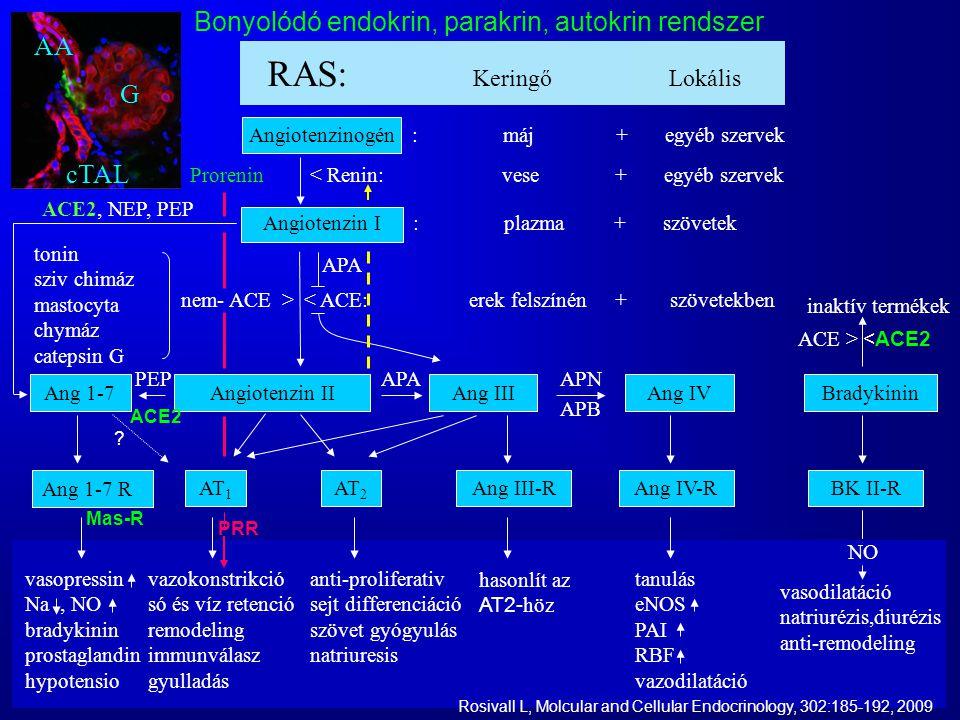 Bonyolódó endokrin, parakrin, autokrin rendszer