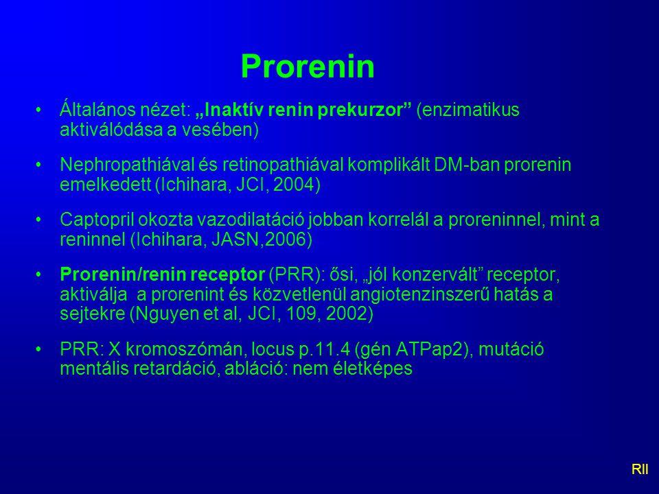 """Prorenin Általános nézet: """"Inaktív renin prekurzor (enzimatikus aktiválódása a vesében)"""