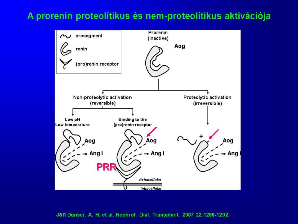 A prorenin proteolítikus és nem-proteolítikus aktivációja