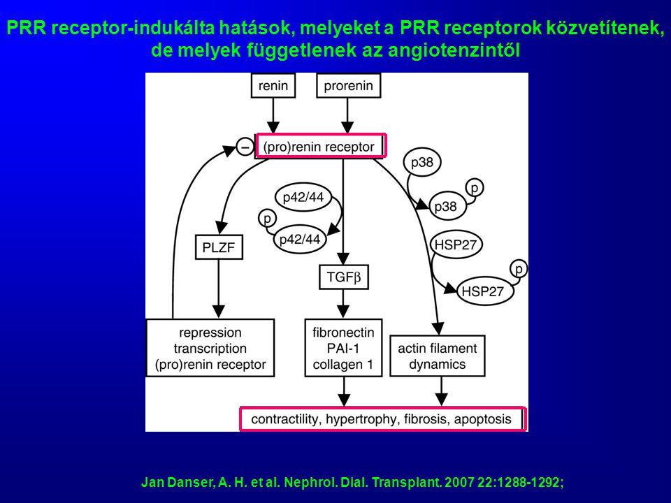 PRR receptor-indukálta hatások, melyeket a PRR receptorok közvetítenek, de melyek függetlenek az angiotenzintől