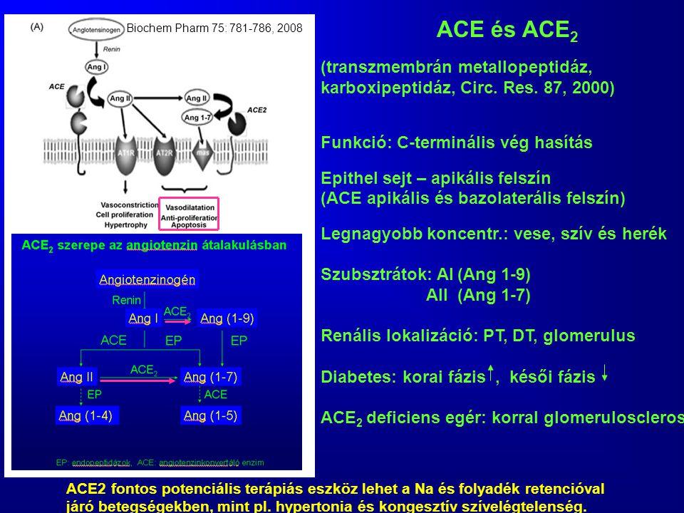 ACE és ACE2 (transzmembrán metallopeptidáz,