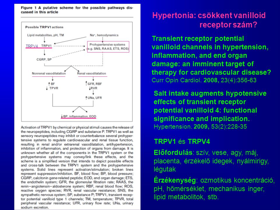 Hypertonia: csökkent vanilloid receptor szám