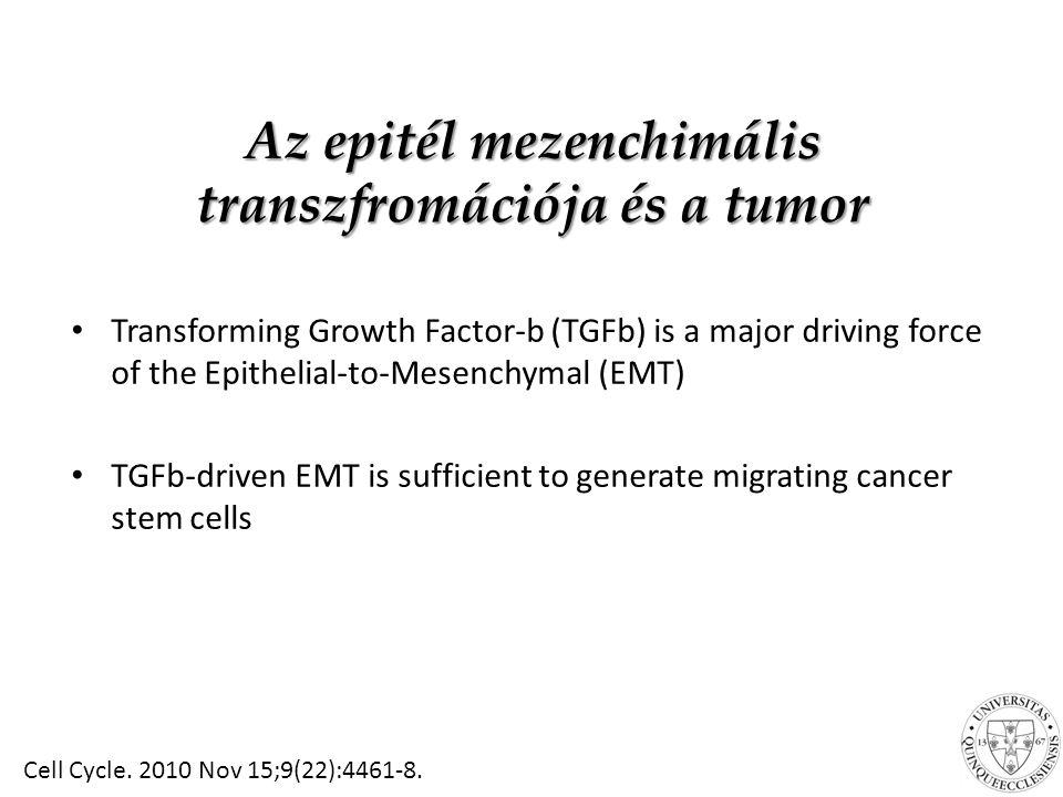 Az epitél mezenchimális transzfromációja és a tumor