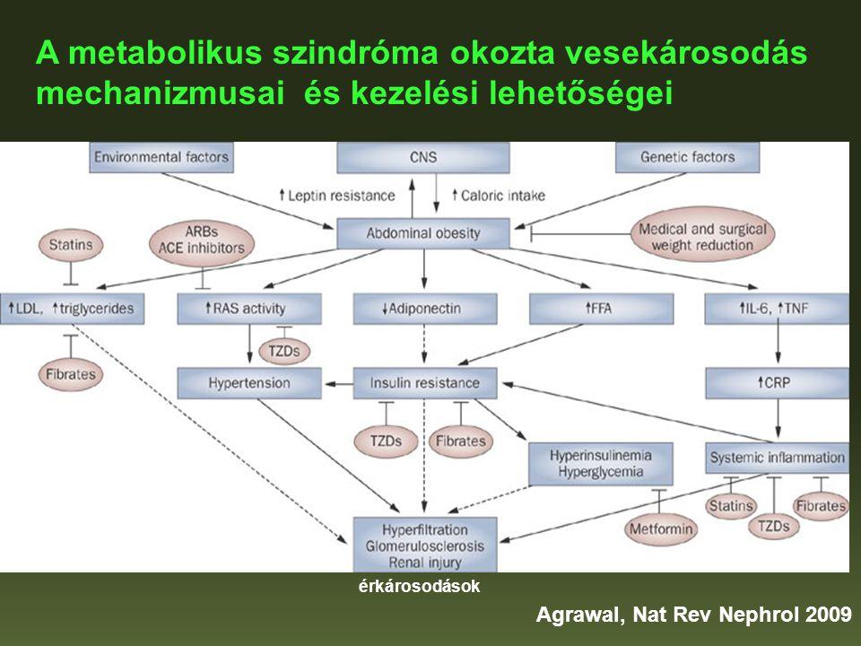 A metabolikus szindróma okozta vesekárosodás mechanizmusai és kezelési lehetőségei