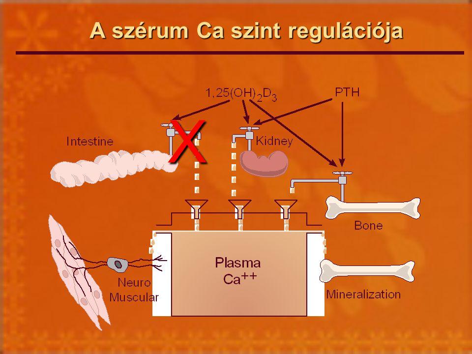 A szérum Ca szint regulációja