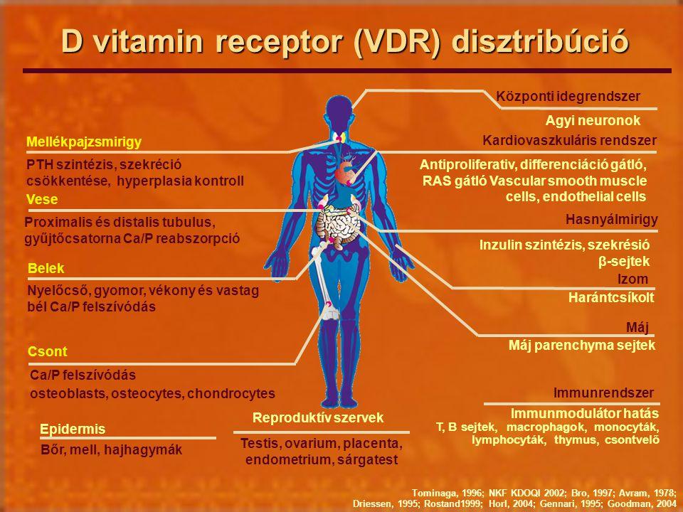 D vitamin receptor (VDR) disztribúció