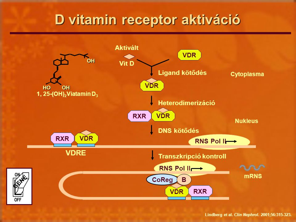 D vitamin receptor aktiváció