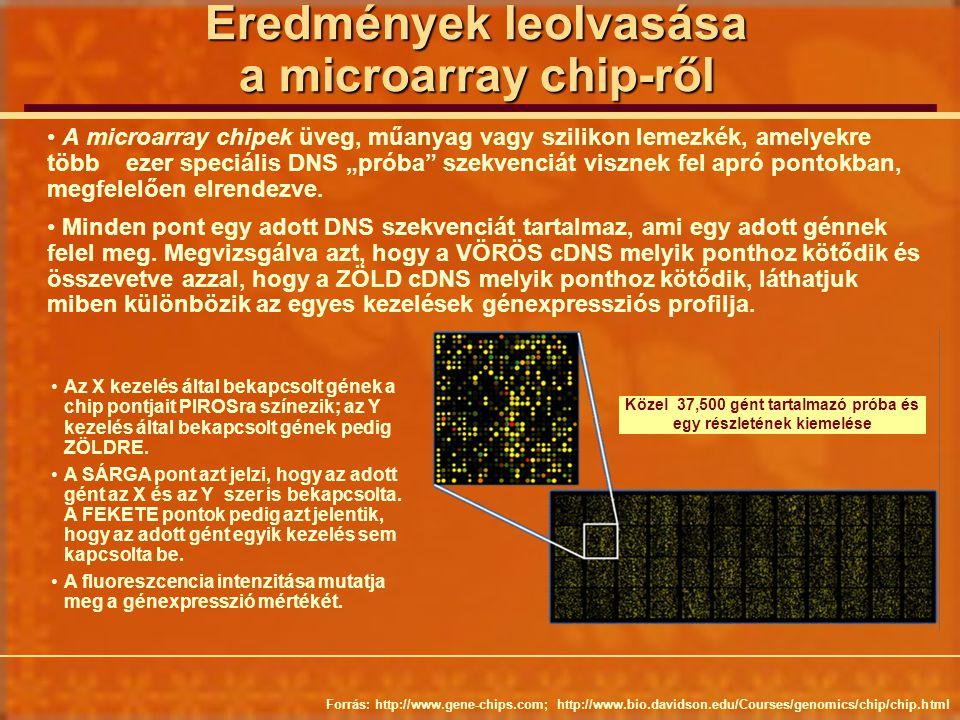 Eredmények leolvasása a microarray chip-ről