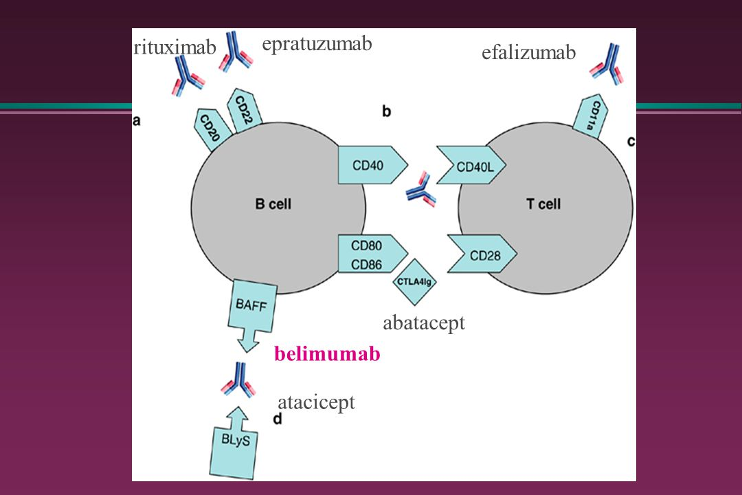 rituximab epratuzumab efalizumab abatacept belimumab atacicept